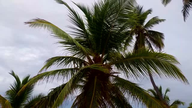 Palm Tree: Stock Video