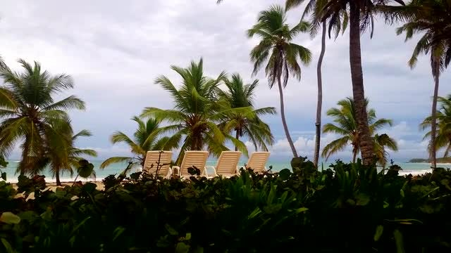Beach With Palm Trees: Stock Video