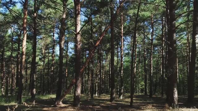 Gliding Through Forest: Stock Video