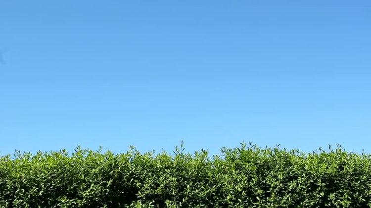 Green Hedge: Stock Video