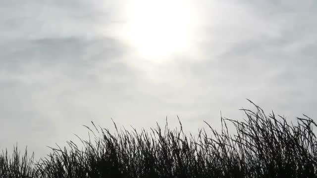 Black Grass: Stock Video
