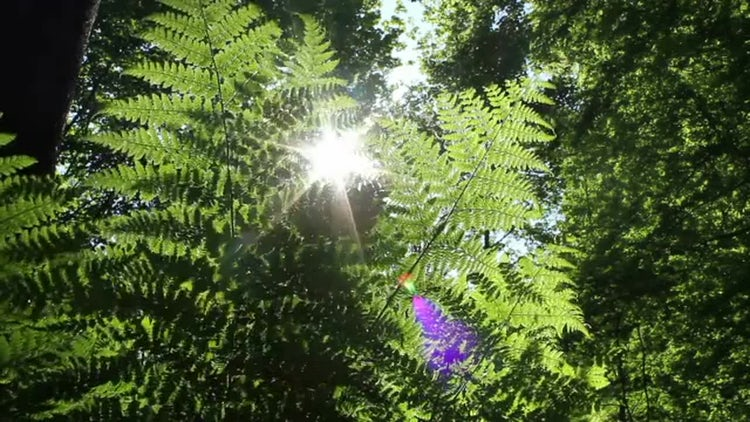 Fern And Sun: Stock Video