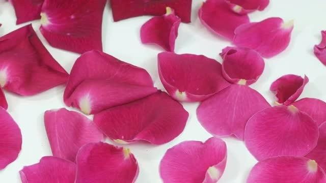 Pink Rose Petals: Stock Video