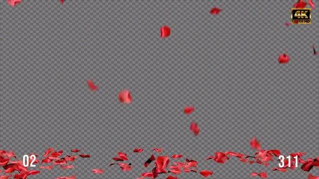 Rose Petal Pack 02: Stock Motion Graphics