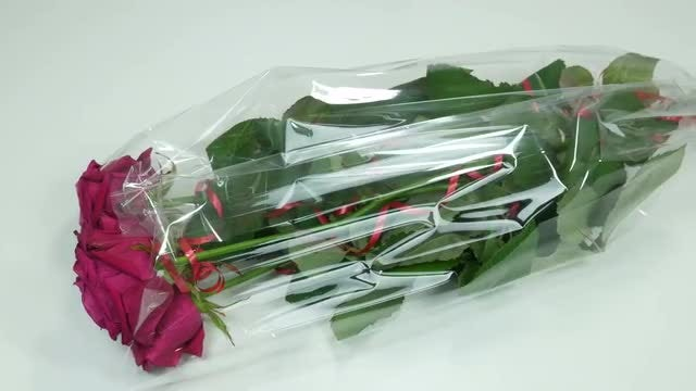 Beautiful Roses: Stock Video