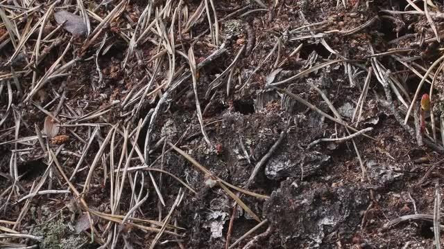 Ants: Stock Video