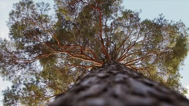 Tree: Stock Video