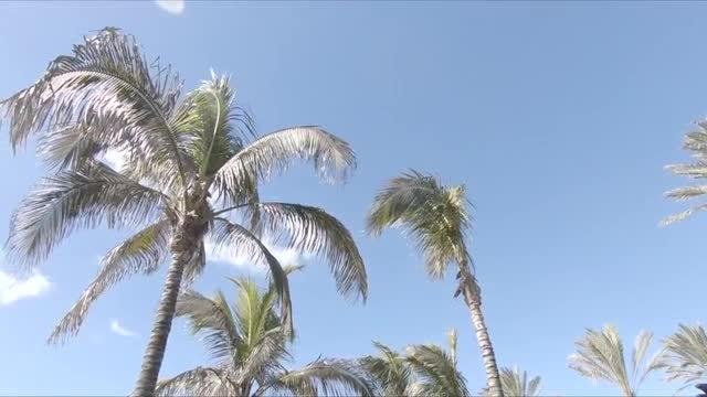 Sunny Palm Trees: Stock Video