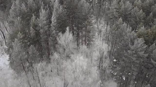 Fly Over Winter Forest: Stock Video