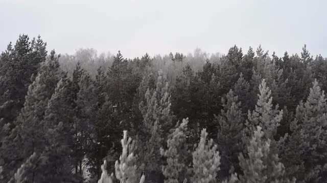 Frosty Trees: Stock Video
