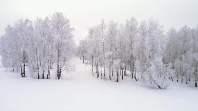 Fly Around Winter Grove: Stock Video
