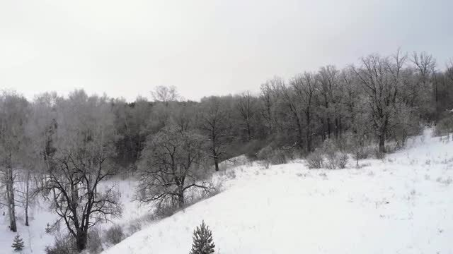 Aerial Of Snowy Forest: Stock Video