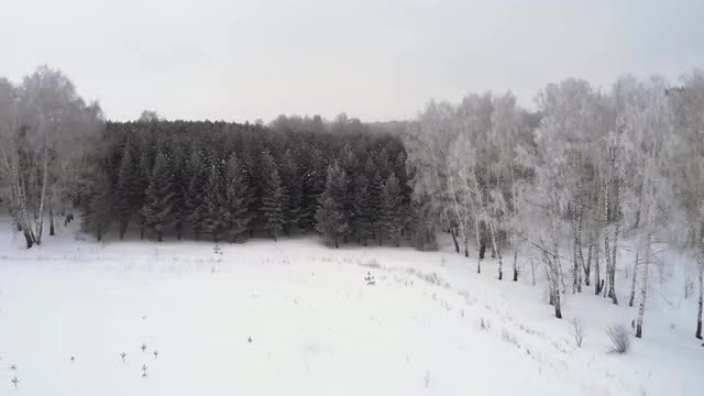 Aerial Of Winter Forest: Stock Video