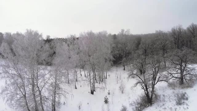 Trees In Winter Forest: Stock Video