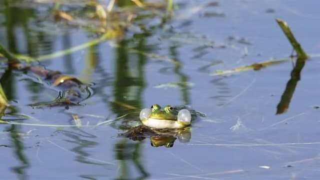 Slow Motion Frog: Stock Video