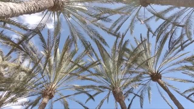 Palm Trees: Stock Video