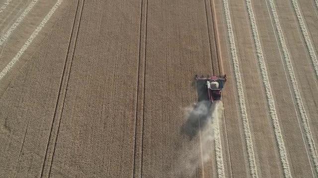 Harvest: Stock Video