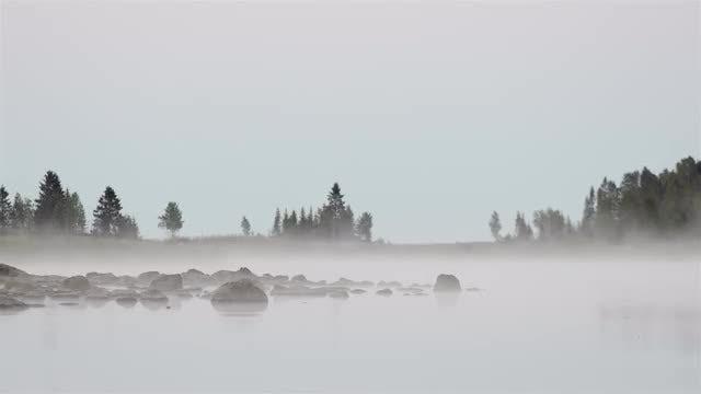 Mist Background Loop: Stock Video