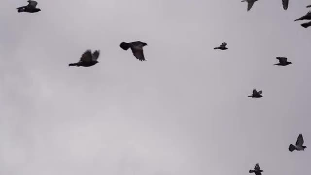 Birds In The Sky: Stock Video