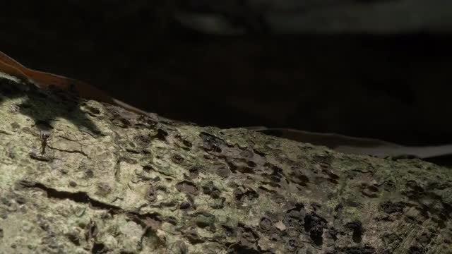 Termites: Stock Video