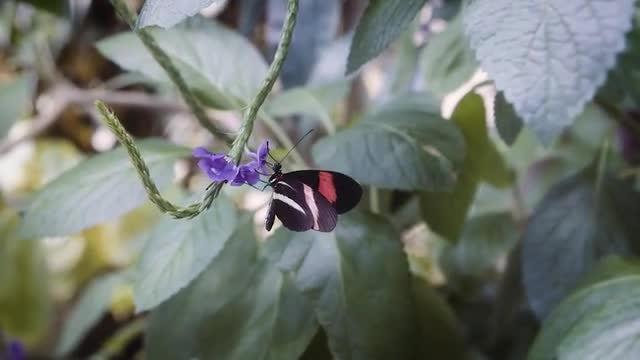 Butterfly On Purple Flower: Stock Video