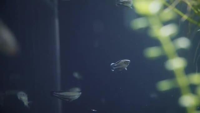 Small Fish In Aquarium: Stock Video