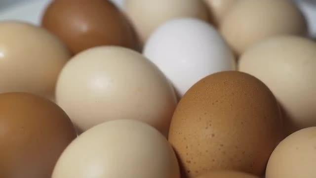 Chicken Eggs: Stock Video