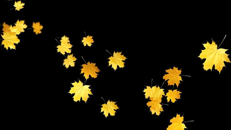Autumn Leaves Falling: Stock Motion Graphics
