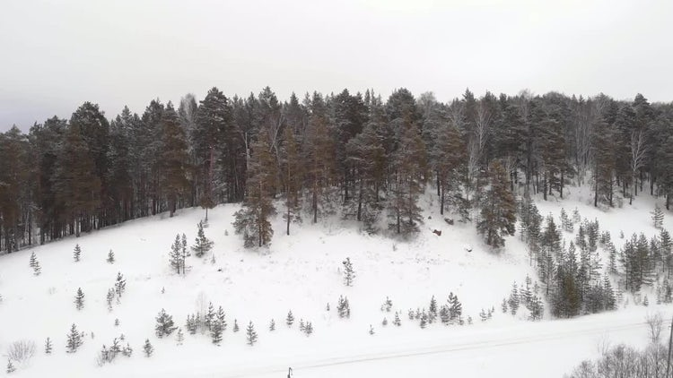 A Forest In Winter: Stock Video