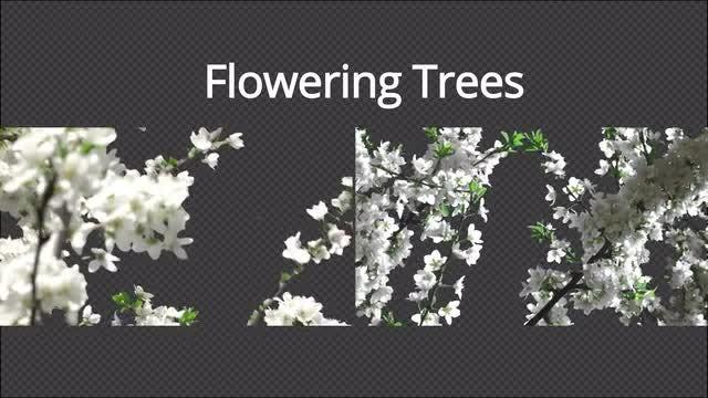 Flowering Trees: Stock Motion Graphics
