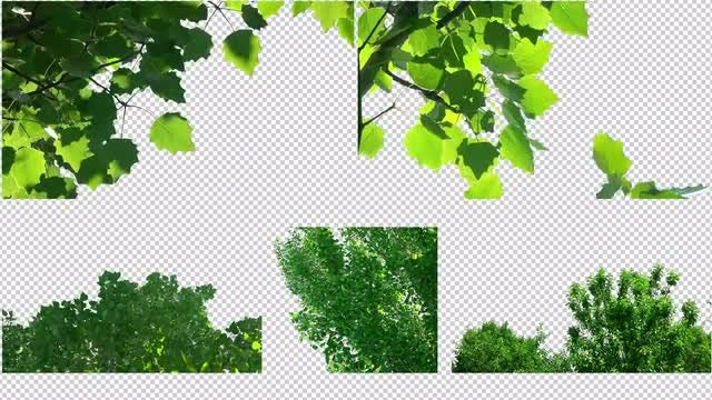 Leaves Of Trees Pack: Stock Motion Graphics