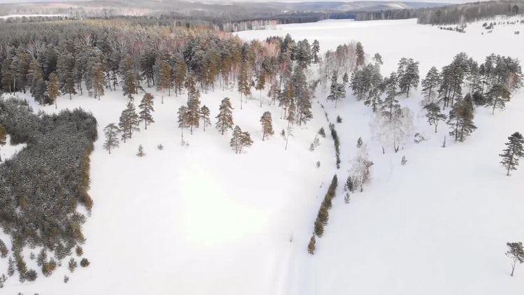 Fresh Snow On Forest: Stock Video