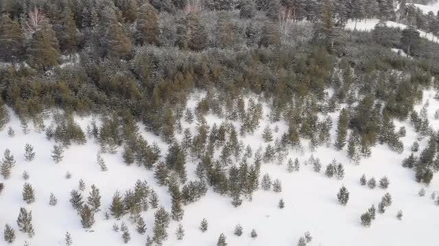 Snowy Fir Trees: Stock Video