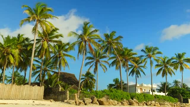 Palm Trees In Zanzibar: Stock Video