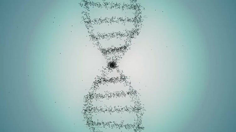 From DNA To Human: Motion Graphics