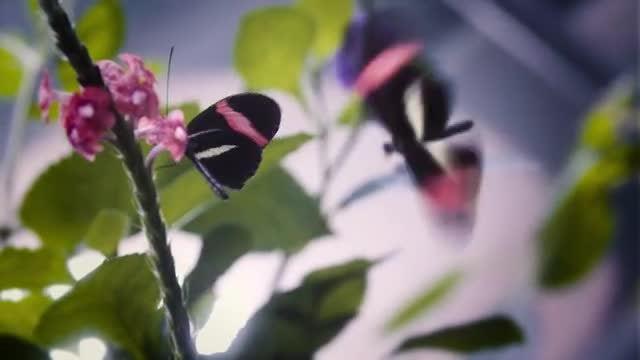 Butterfly  Macro Shot: Stock Video