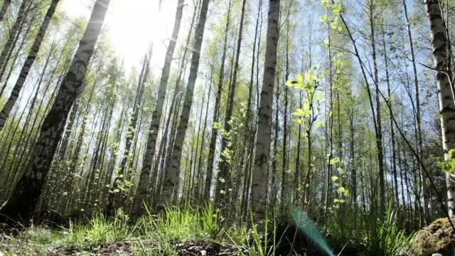 Bright Forest: Stock Video