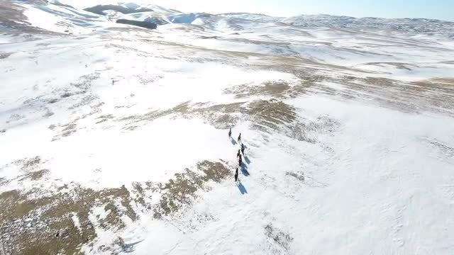 Wild Horses Running - Stock Video | Motion Array
