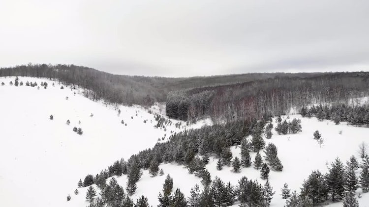 Winter Forest: Stock Video