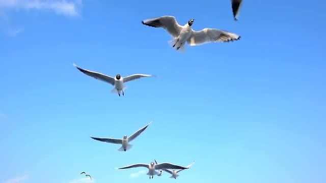 Close-Up Of Gulls: Stock Video
