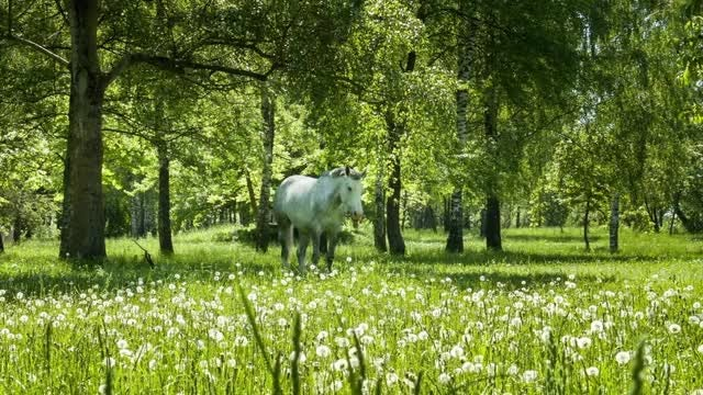 White Horse In The Woods: Stock Video