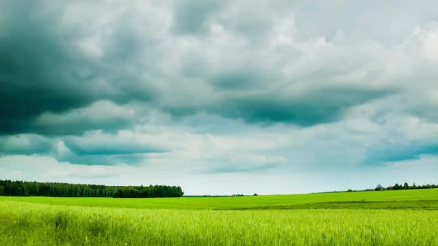 Time Lapse Of Green Field: Stock Video