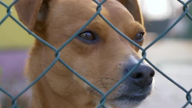 Sad Dog: Stock Video
