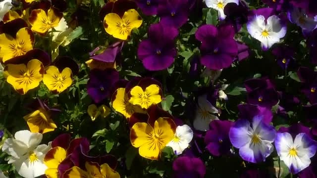 Colorful Flowers: Stock Video