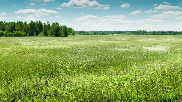 Fields Of Green: Stock Video
