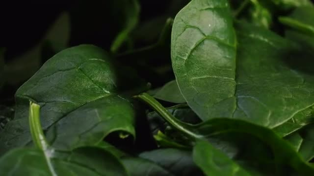 Spinach: Stock Video