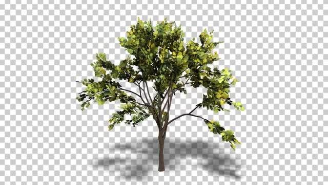 Swaying Tree Loop: Stock Motion Graphics