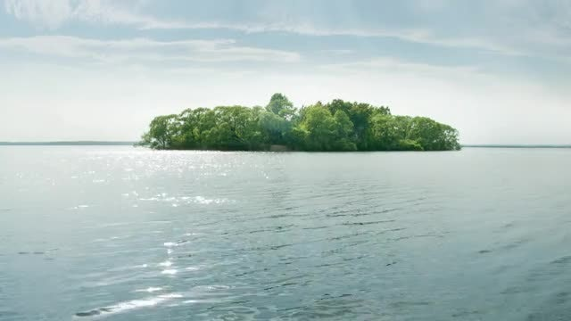 Forest Island On Lake: Stock Video