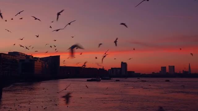 Seagulls Hovering Around At Dusk: Stock Video