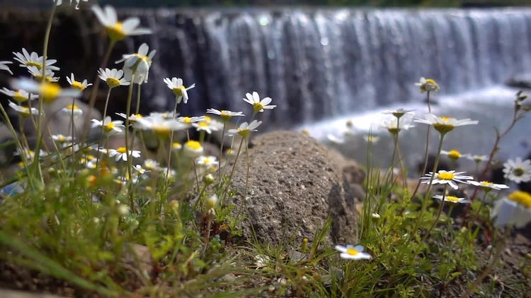 Waterfall And Flowers: Stock Video